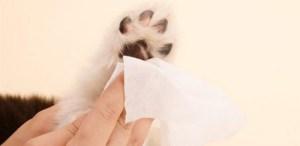 5 formas de limpiar las patitas de tu perro después de un paseo