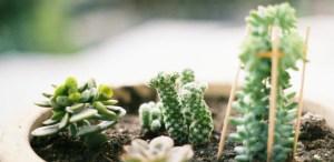 Cuentas de Instagram si eres un amante de las plantas
