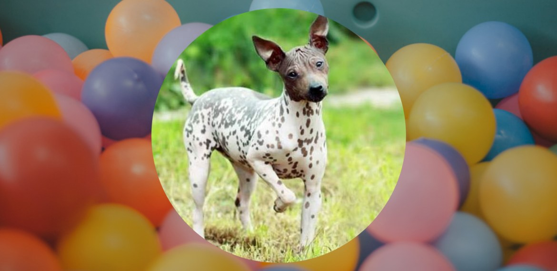 ¿Padeces de alergias? te decimos las razas  de perros hipoalergénicas - sabrina-15-1