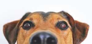 Entrena a tus perros con vinagre ¡Te contamos todo!