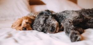 Aprende a diferenciar entre los vómitos de tus mascotas