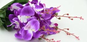 Te decimos los mejores lugares para comprar Orquídeas en CDMX