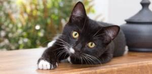 5 razones para no cortarle las uñas a tu gato ¡Ojo aquí!