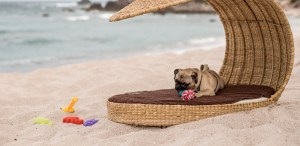 6 hoteles pet-friendly perfectos para un viaje en Riviera Nayarit
