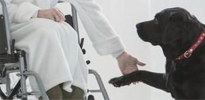 «Juntos es Mejor», la iniciativa de terapias asistidas con perros que amarás