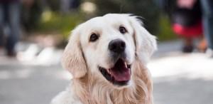 Tu perro sabe cuándo le mientes ¡Aquí la razón!