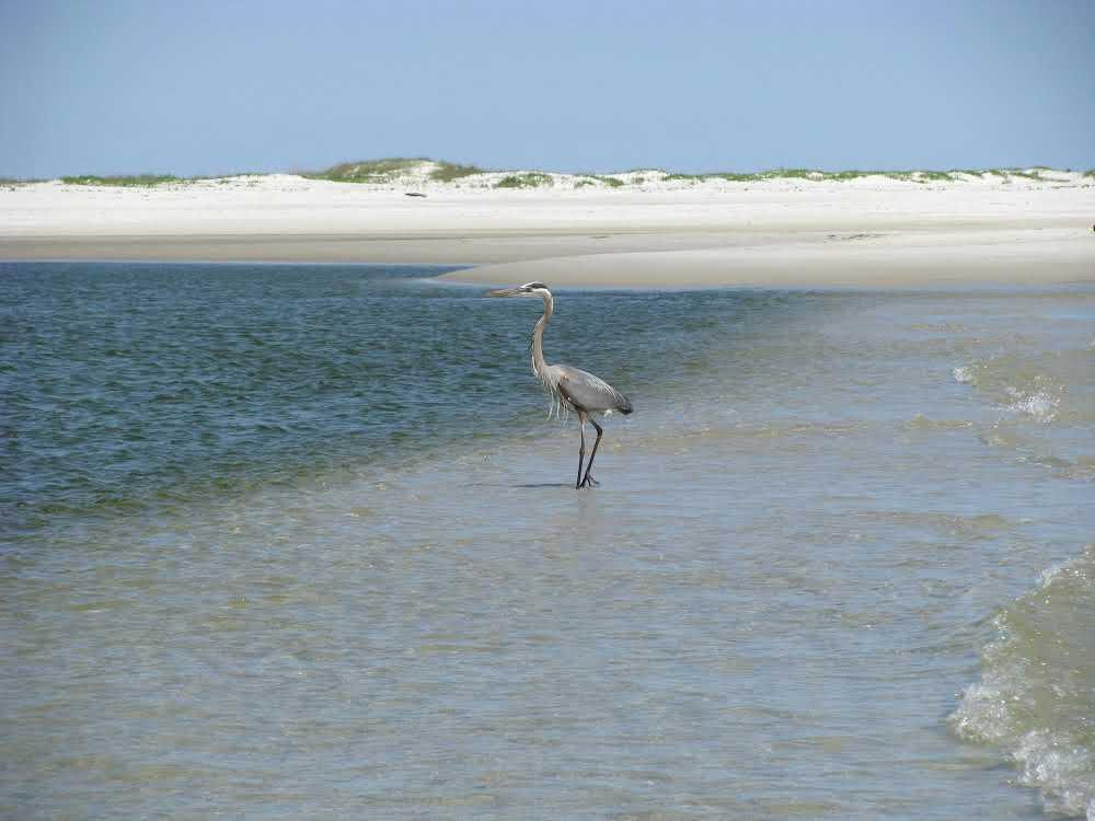 dauphin-island-visitors-guide