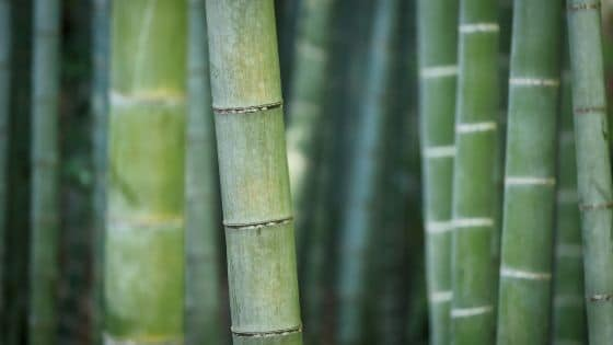 Can You Grow Bamboo in Michigan?