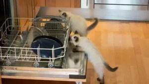 Is Bamboo Dishwasher Safe?