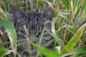 Is Bamboo Safe for Cats and Dogs?