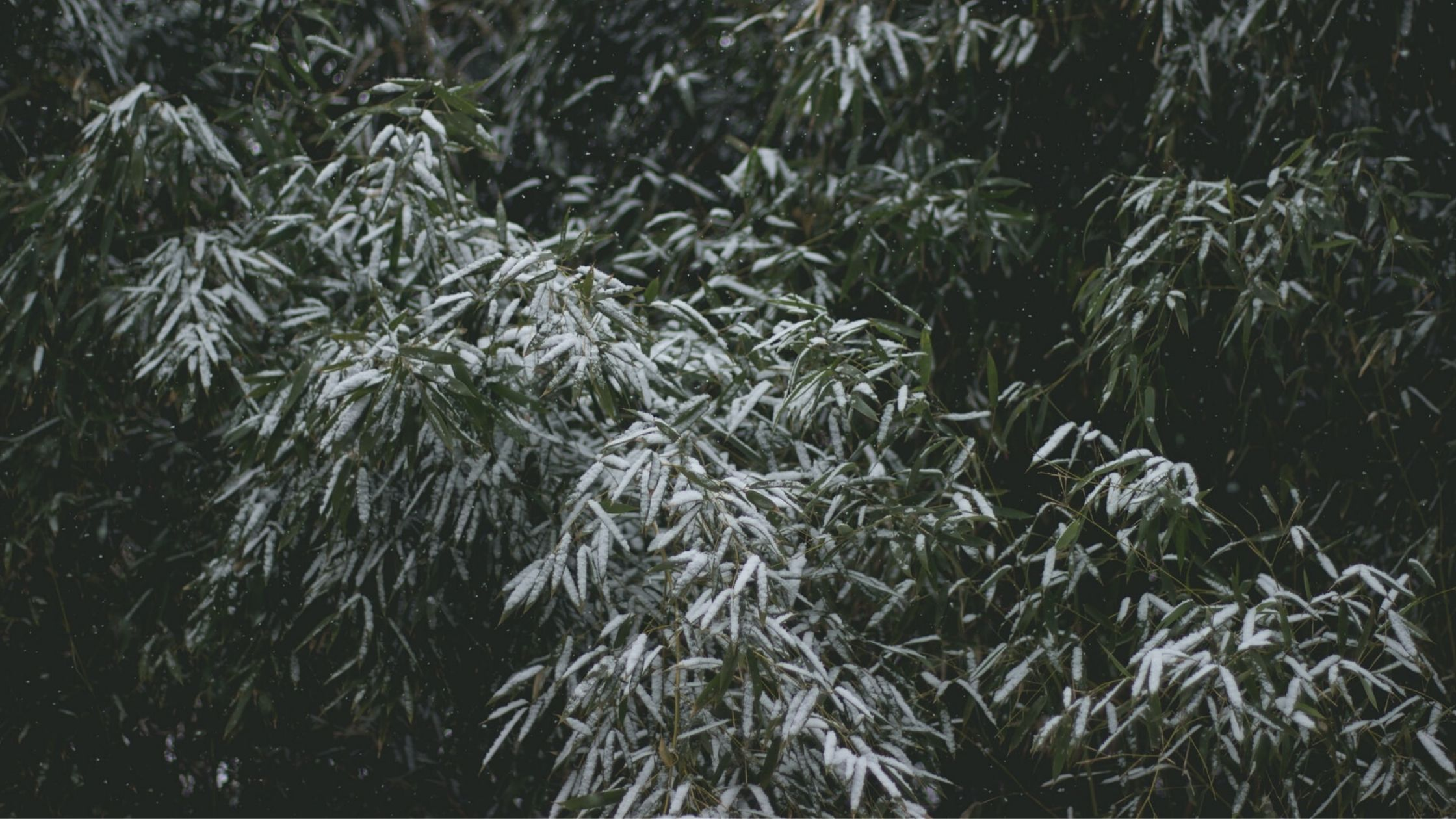 Wisconsin – Grow Cold Hardy Bamboo