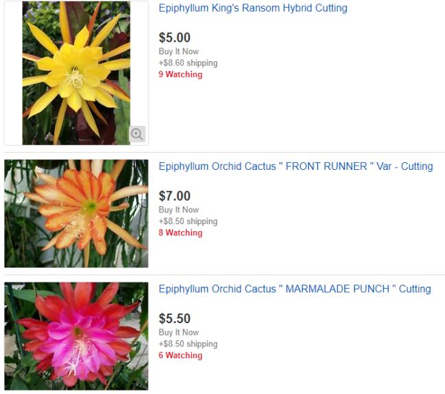 eBay Plants - You Can Do It! - The Happy Hoer