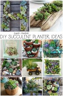 Diy Succulent Planter Ideas Happy Housie