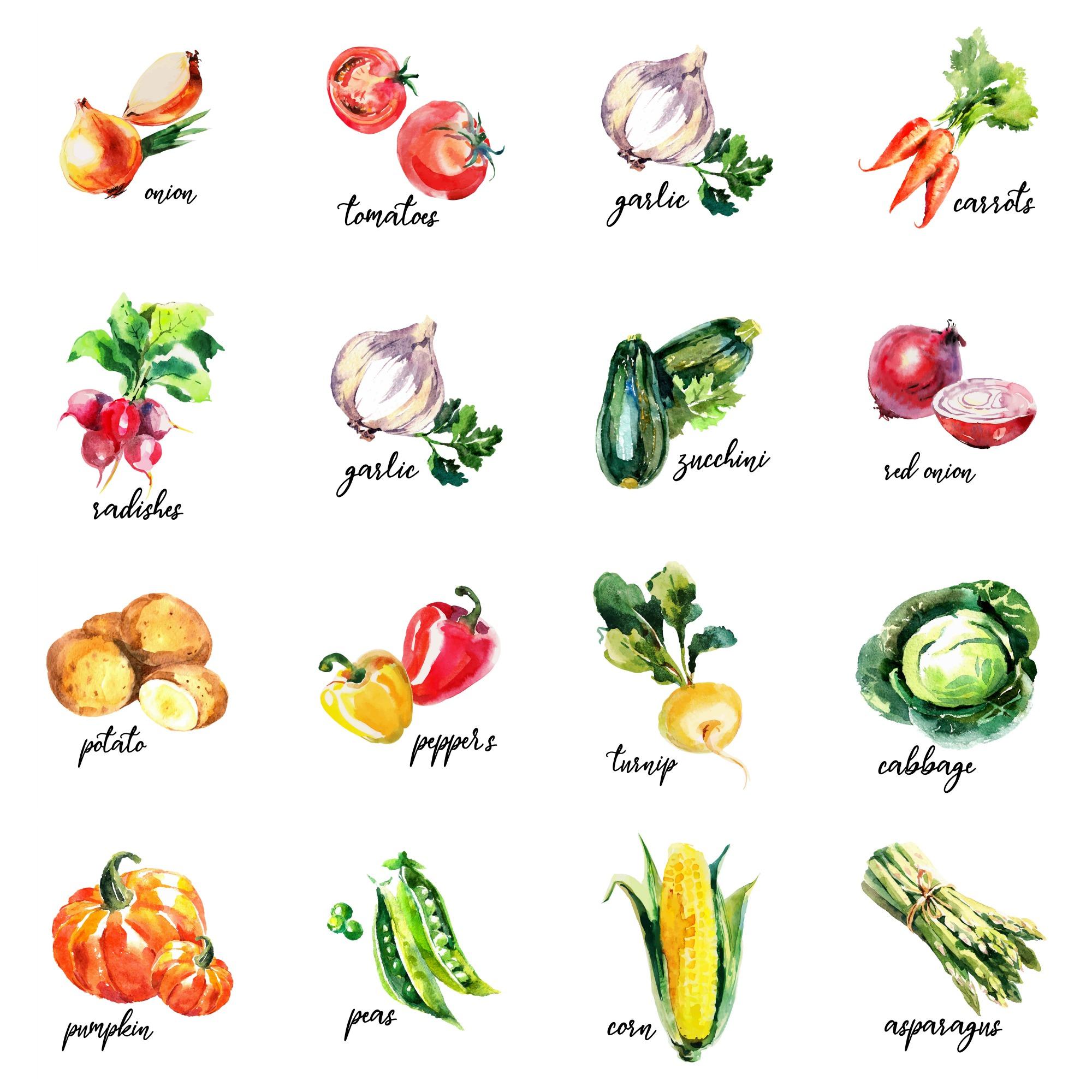 16 Free Watercolour Vegetable Kitchen Printables