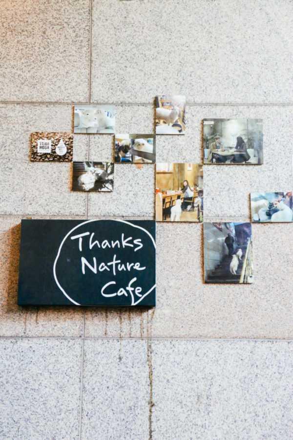 Thanks Nature Café, Seoul, Korea