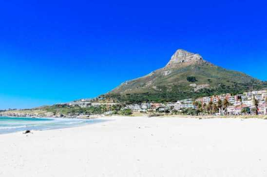 Camps_Bay_Lions_head