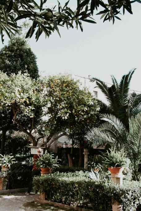 Garten in den Banos Arabes palma de mallorca