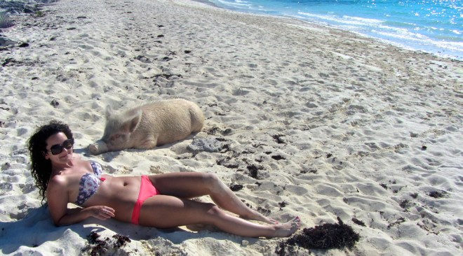 Pigs on a beach