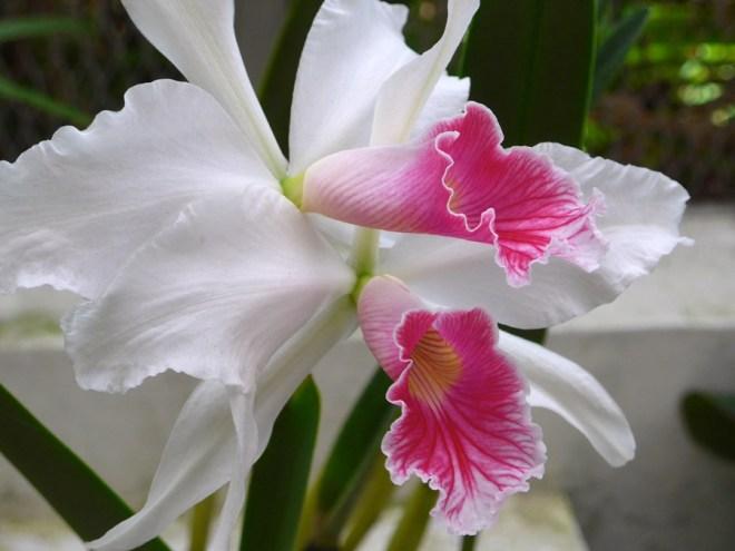 Botanical Garden Rio de Janeiro - Jardim Botanico do RIo de Janeiro - Orchid House
