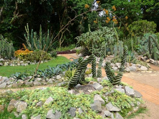 Botanical Garden Rio de Janeiro - Jardim Botanico do RIo de Janeiro - Spiral cactus