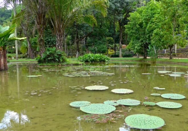 Botanical Garden Rio de Janeiro - Jardim Botanico do RIo de Janeiro - pond