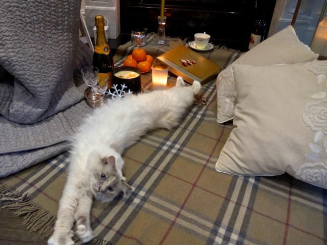 Cat-stretching---Birman