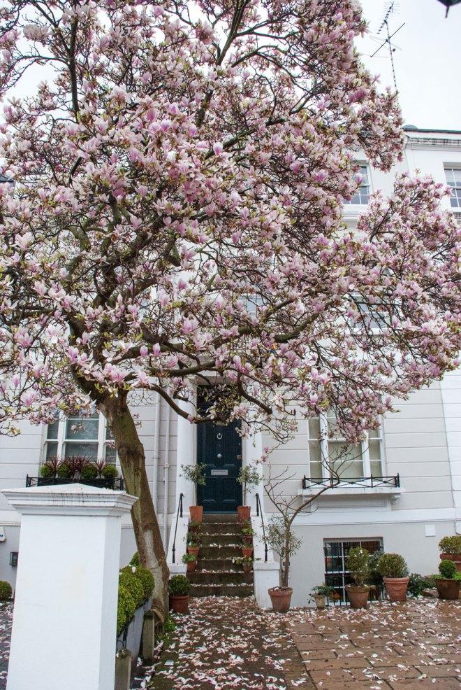 Earls-Court-Gardens-Kensington-Blossom-London