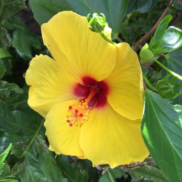 retirement flower