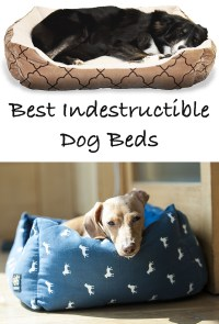 Reviews Of The Best Indestructible Dog Beds For Extreme ...