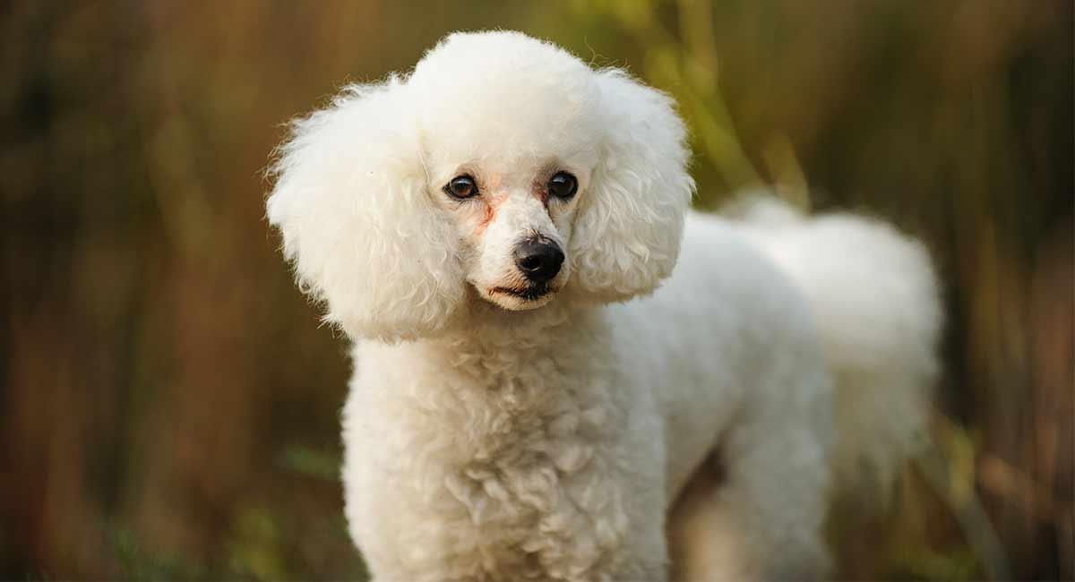 Loyal Dog Food And Hair Loss