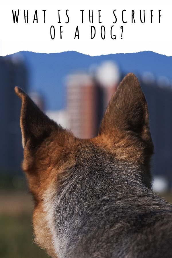 Grabbing Dog By Scruff : grabbing, scruff, Scruff, Purpose?