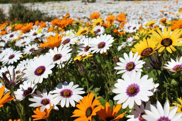 Plan A Trip To The Wild Flowers
