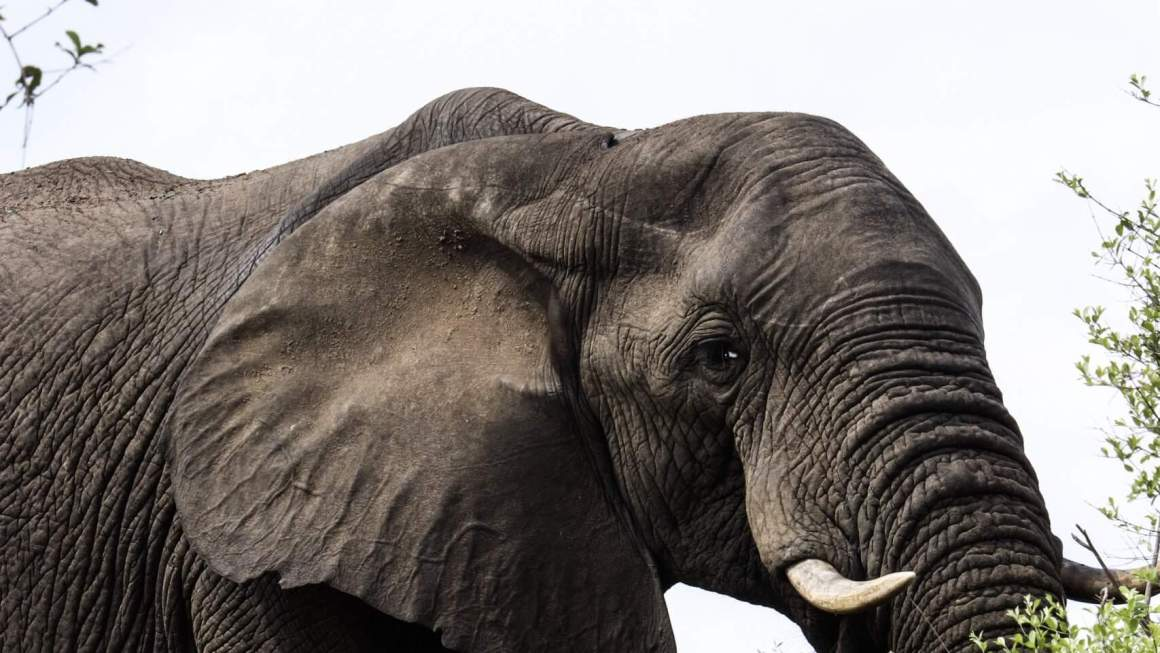elephant on safari trip