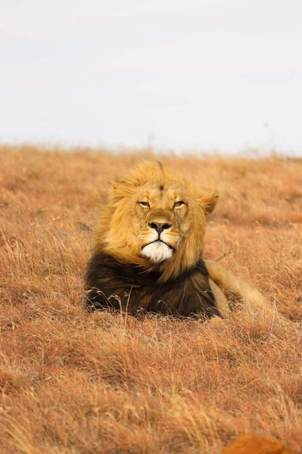 Mount Camdeboo Private Game Reserve