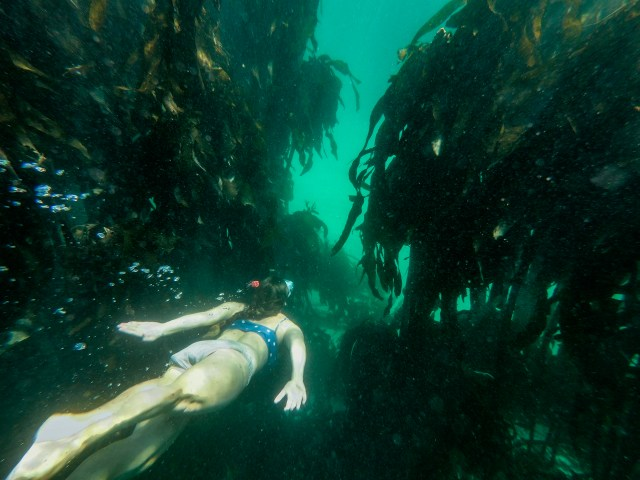 Boulder's Beach freediving site in Cape Town