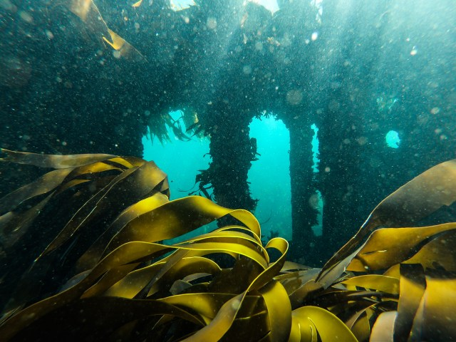 Antipolis Wreck freediving site in Cape Town