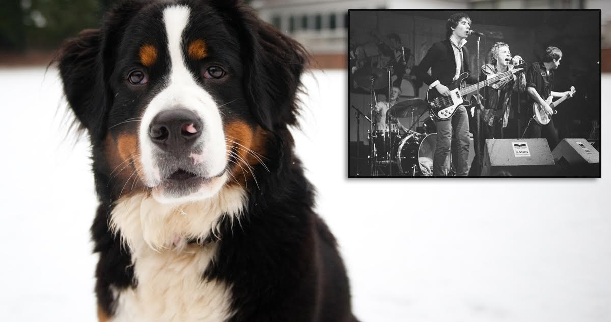 Is Punk Dead? How the Hell Should I Know? I'm a Bernese Mountain Dog