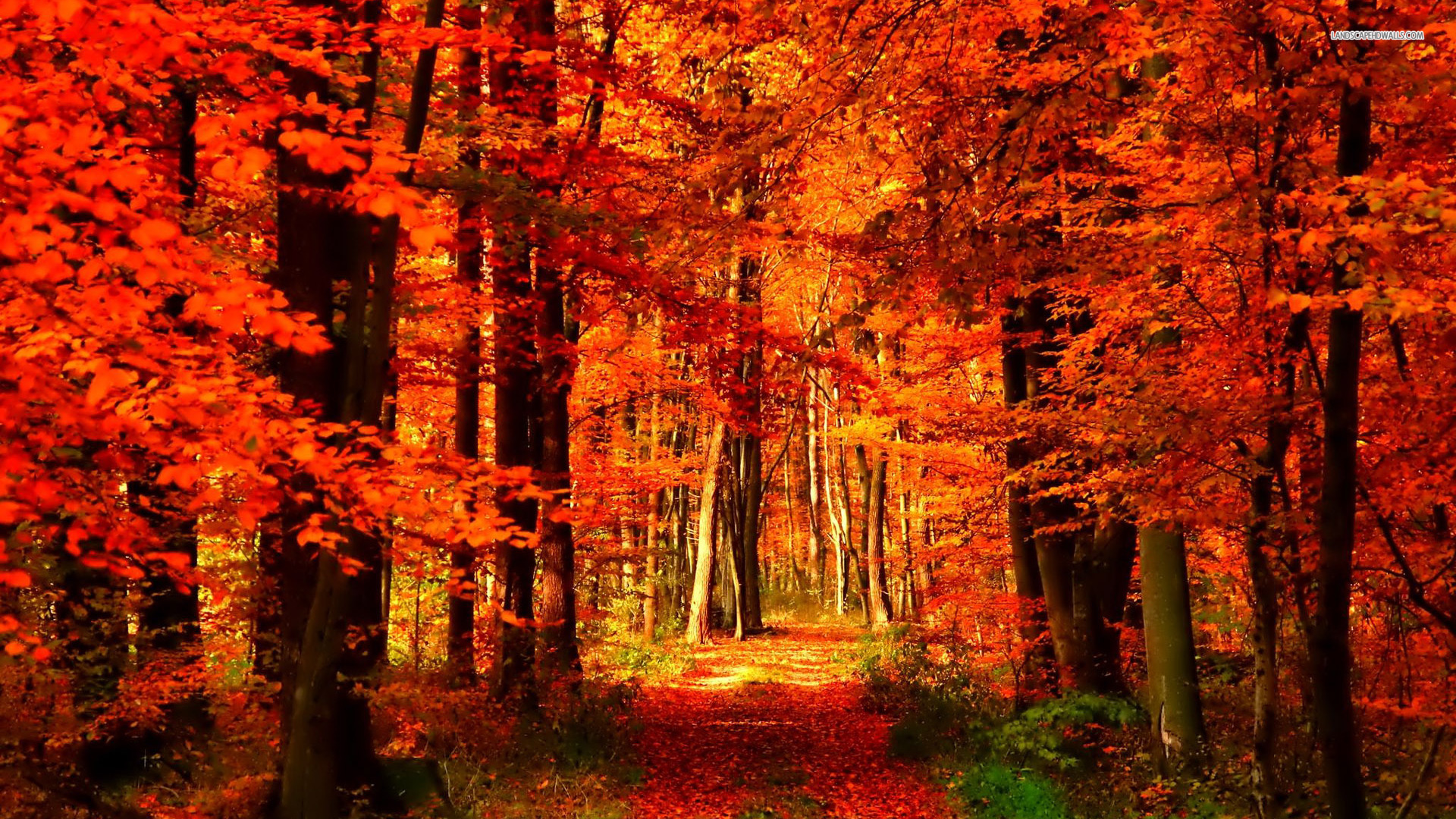 Autumn  The Hare Krishna Movement