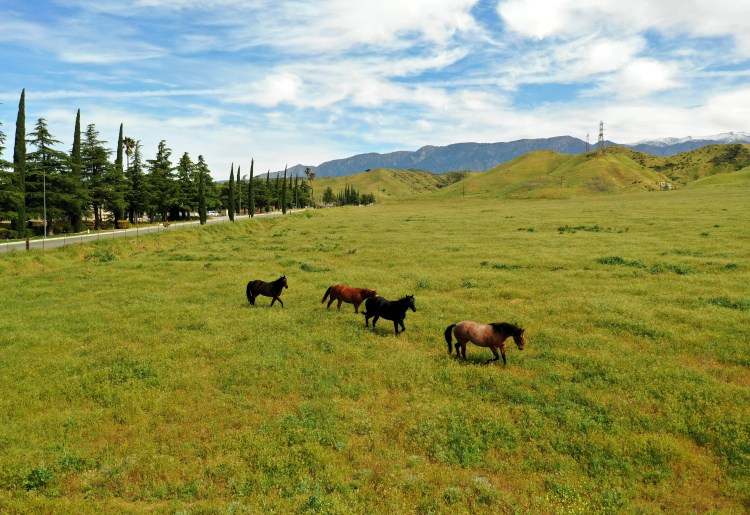 Evergreen at Banning Ca Horses