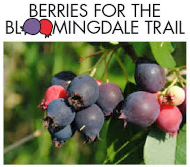 Berries for Bloomingdale as featured on The Haute Seeker in July 27th - 30th 2019 events in Chicago
