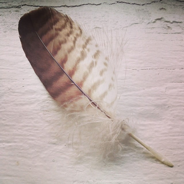 brown and white feather on a white table