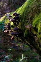 Fungus (16)
