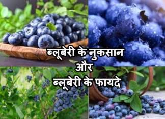ब्लूबेरी के नुकसान और ब्लूबेरी के फायदे | Blueberry Khane Ke Fayade In Hindi