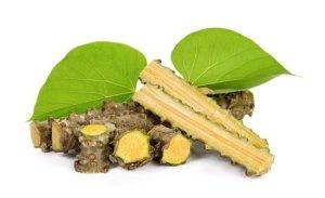 Tinospora cordifolia/ guduchi / गिलोय