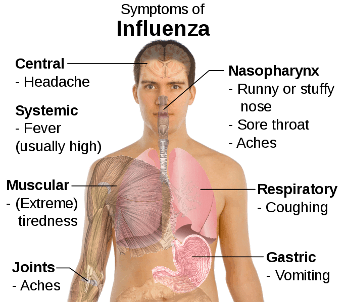 diagram of how vaccines work 1990 honda civic stereo wiring severe influenza virus hits australia - the healthy bear
