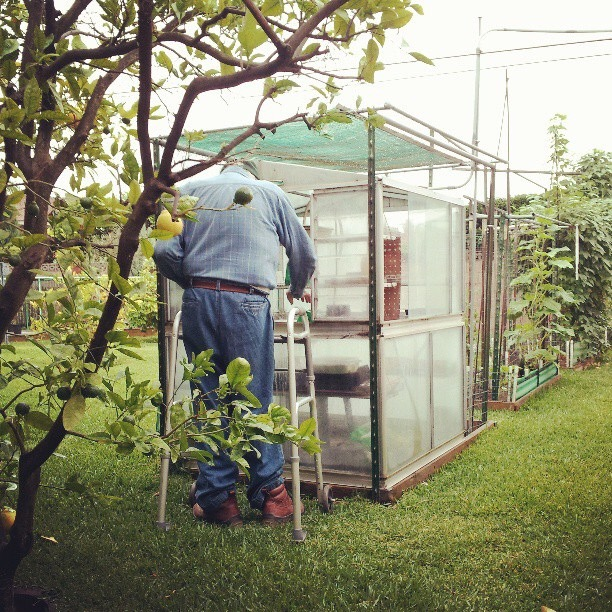 My grandpa working diligently in his greenhouse