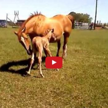 This Foal Fell While Standing For The First Time…Then Came The Cute Part!