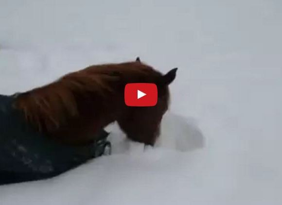 Watch This Horse Attempt To Make A Snow Angel!