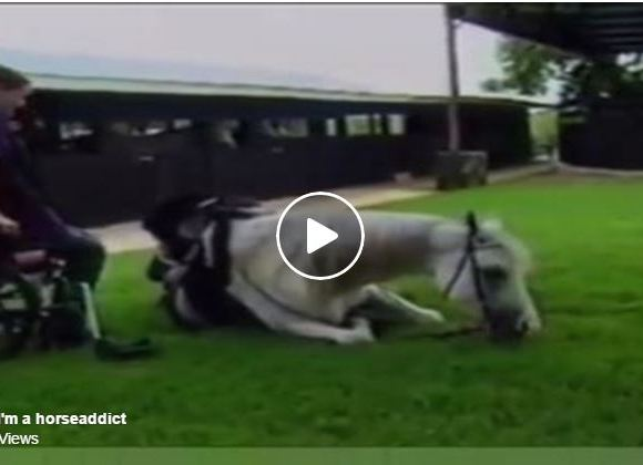 She May Be In A Wheelchair, But That Doesn't Stop Her From Riding Her Dream Horse!