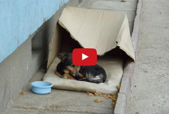 Homeless Dog Living In Cardboard Box Gets Rescued – Watch His Beautiful Transformation